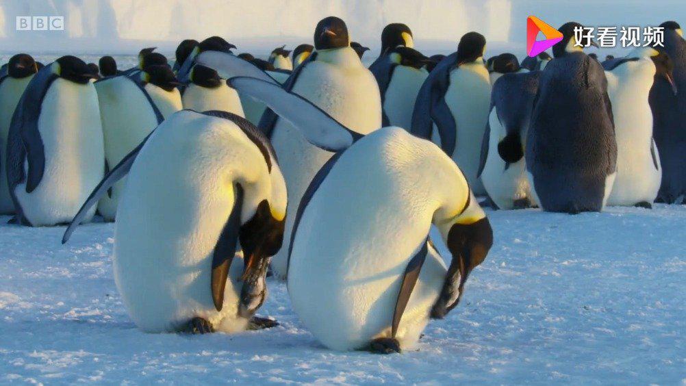 BBC动物王朝.第2集.皇帝企鹅.中英字幕