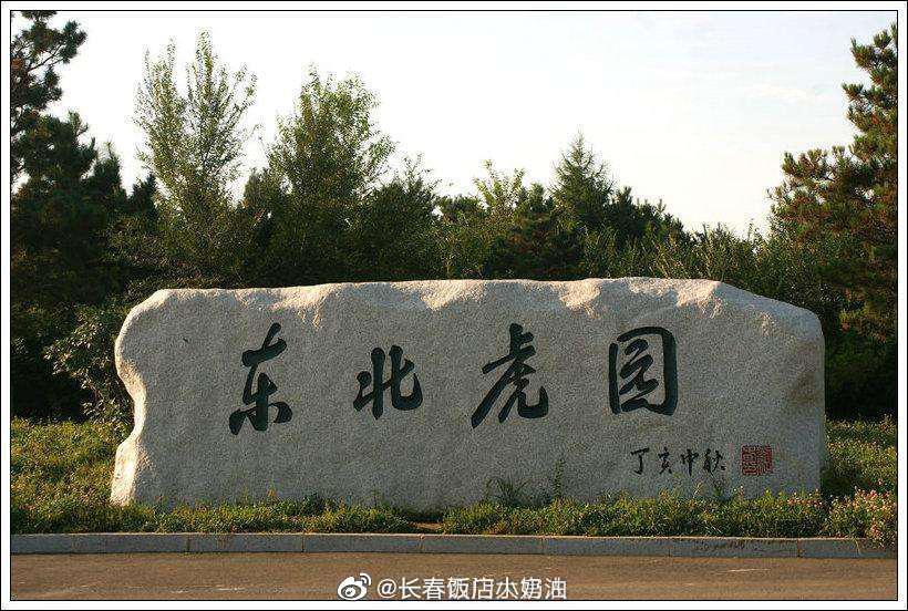 长春 东北虎园本月30日起恢复开园 今年对全国一线医护工作者实行免票