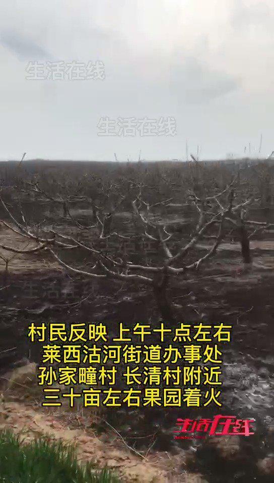 3月29日上午 莱西沽河街道 孙家疃与长清村30亩果园突发大火