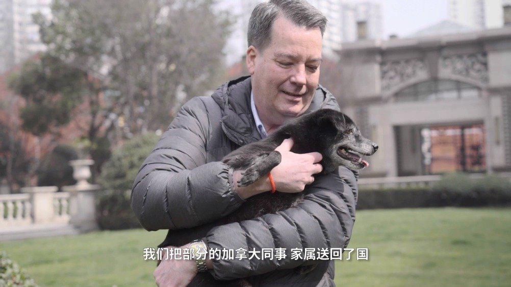 加拿大驻华领事救助流浪动物 ,网友:暖心