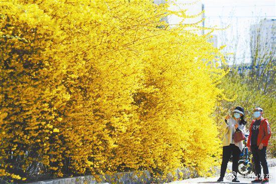 凤城春之美