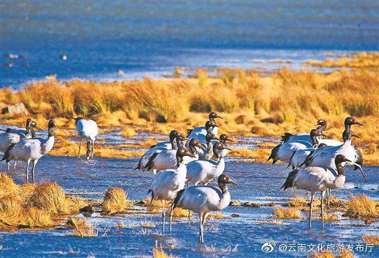 3月25日9时,云南大山包黑颈鹤国家级自然保护区管护局工作人员共监测