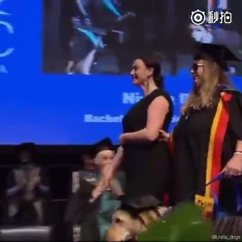 毕业典礼上,主银和和她的导盲犬穿戴着学士帽和学士服