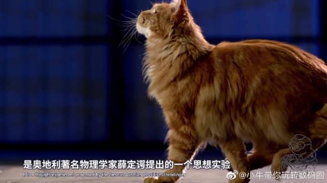 薛定谔的猫是什么?它告诉你平行宇宙和量子力学,其实很有趣!