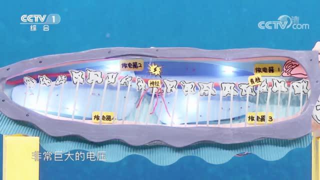 """""""水中高压线""""电鳗是如何放电的?一起探索→"""