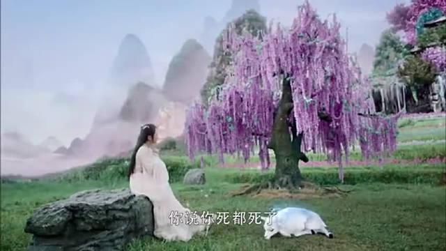 杨紫 邓伦 罗云熙