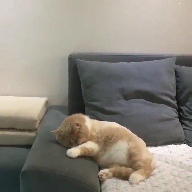 春梦了无痕,沙发垫不用洗了