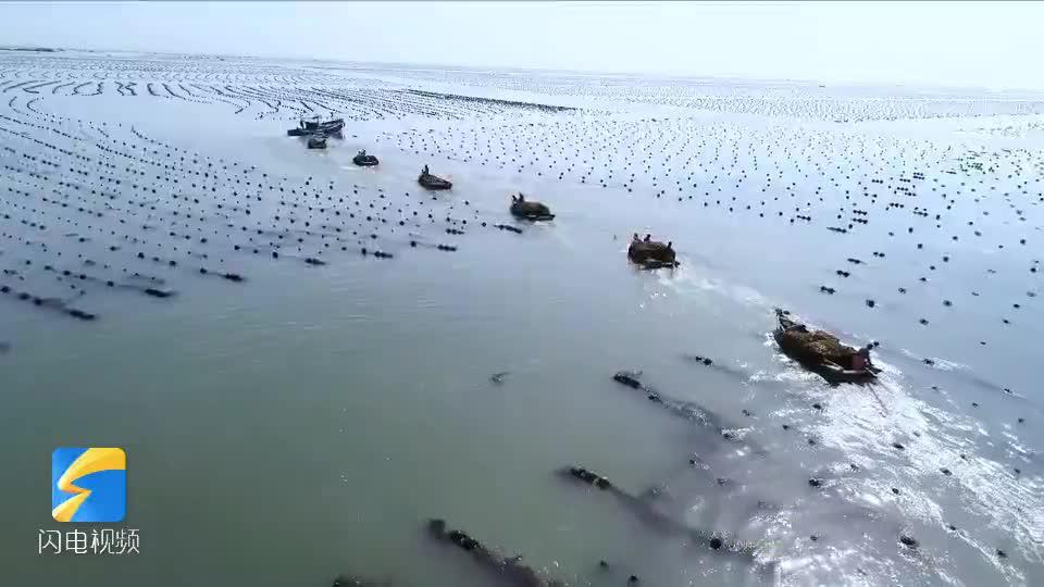 44秒丨海带丰收满船舱!航拍荣成海带收割季壮观景象