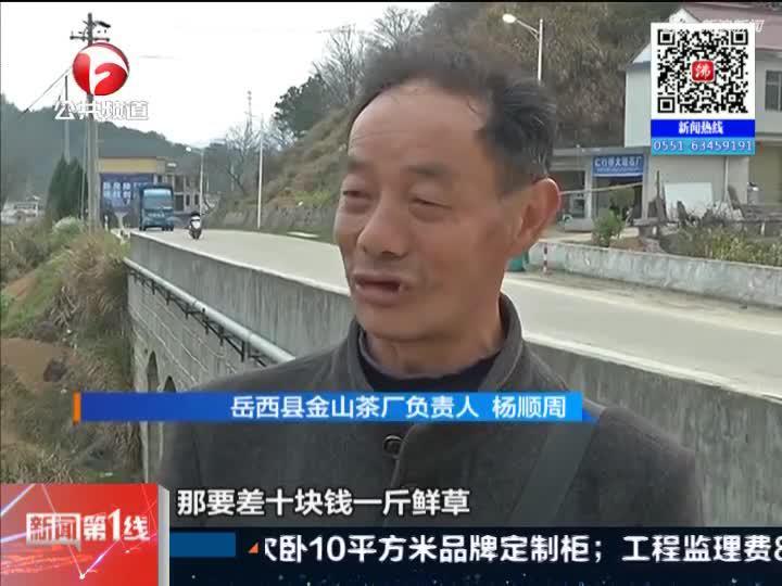 《新闻第一线》岳西:新茶销售遇冷  茶农茶厂承压