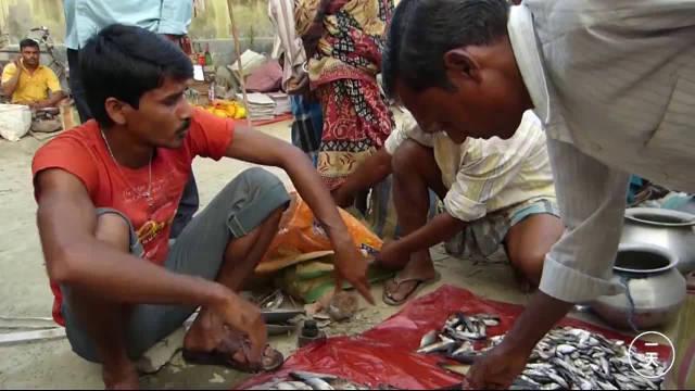 印度卖鱼的乡镇市场,看看印度人是怎么杀鱼的?好奇葩!