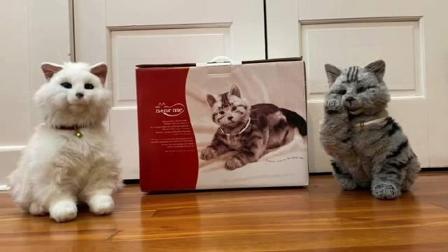 两只机器猫争宠各种卖萌,简直太治愈了😂