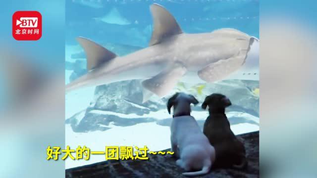 """乔治亚水族馆因疫情关闭小狗撒欢赏鱼""""独享""""风景"""