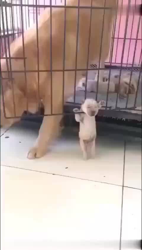 小狗:老妈,我先行一步了