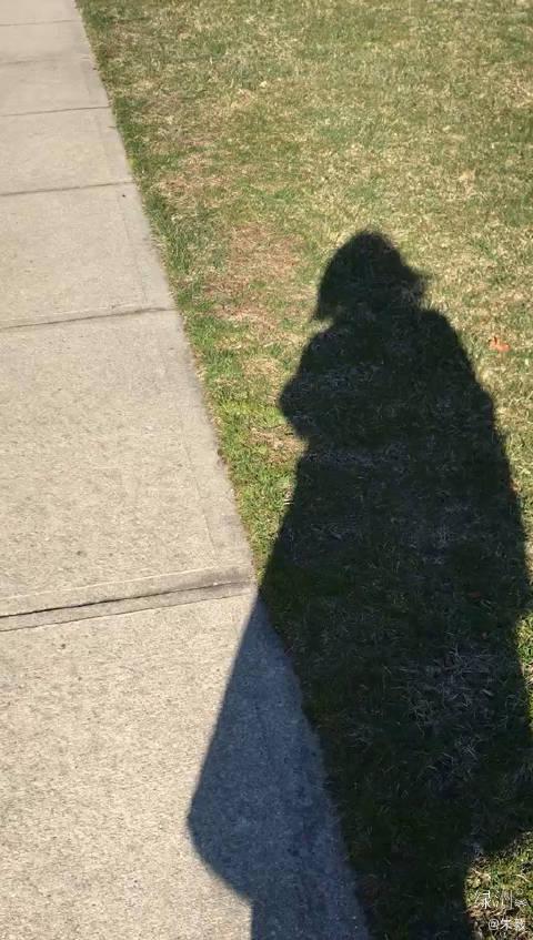 美国同学护理完新冠肺炎重症患者,回家路上阳光明媚,她自拍的影子