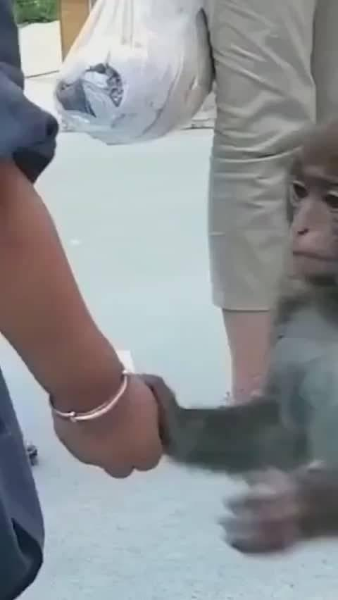 万物皆有灵!猴子以为都是被锁住的。更多精彩内容,可以进我微博看!