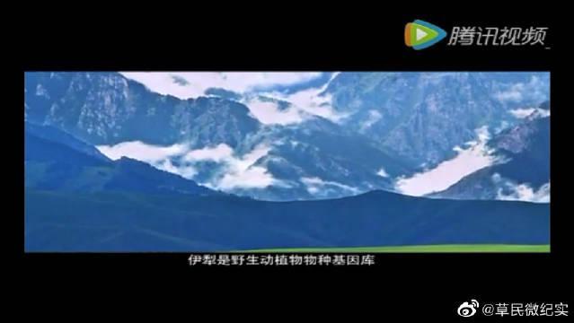 新疆唯美宣传片:风光伊犁令人神弛,这景色你值得一看!