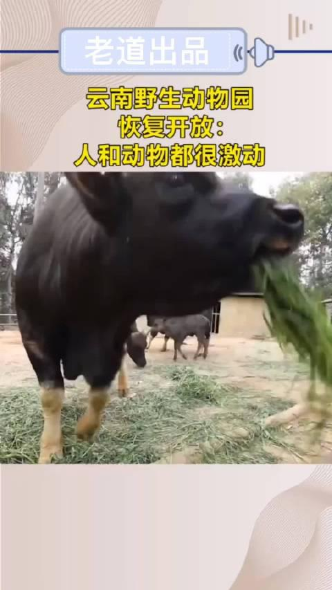 云南野生动物园恢复开放:人和动物都很激动!