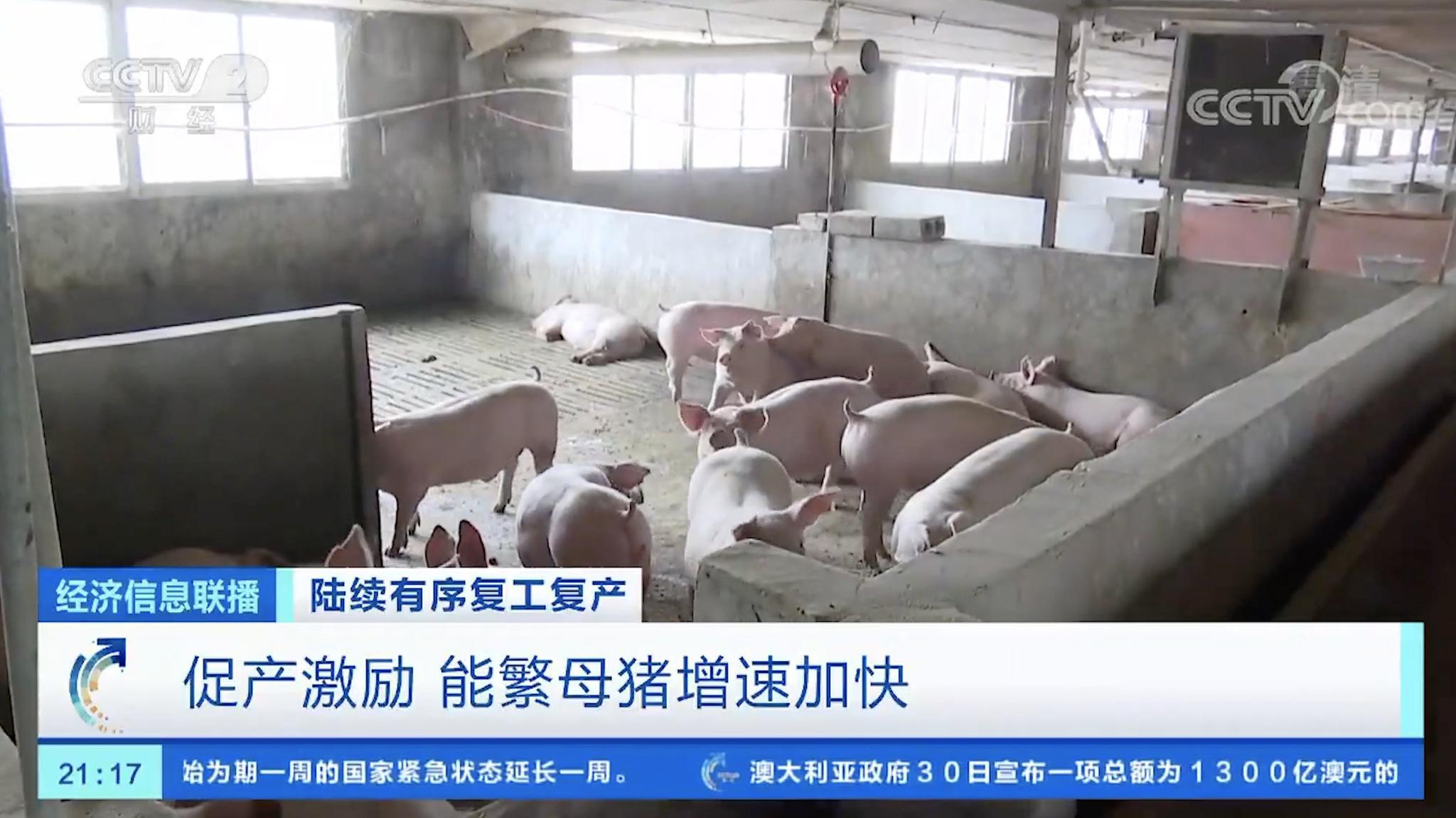猪肉价格连续五周回落江苏奖励生猪万头户120万元
