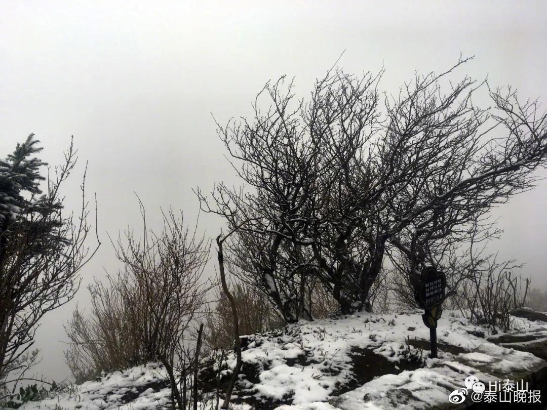 细雨风吹作琼花,泰山之巅迎春雪
