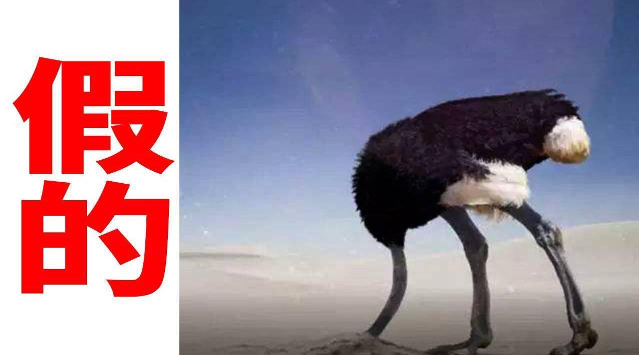 鸵鸟遇敌,会把头埋沙子里?6个骗你好久的伪知识猫和狗是色盲(错!