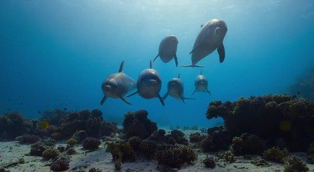 Disney自然频道的两部原创纪录片《大象》和《海豚礁》今日正式上线