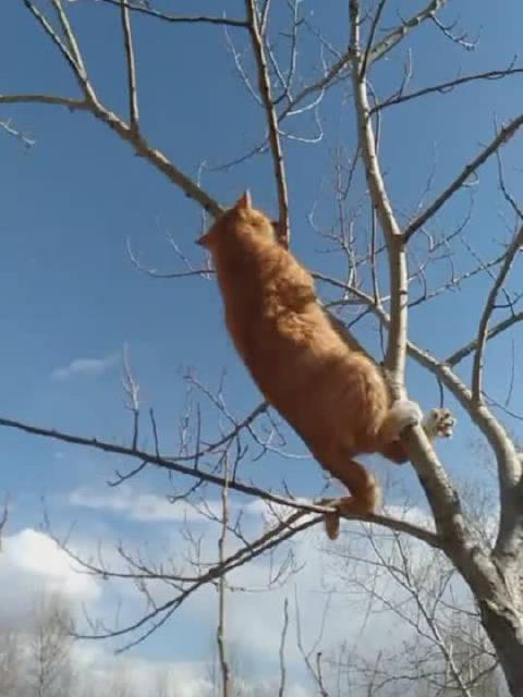 已经很少看到这么敬业的猫!