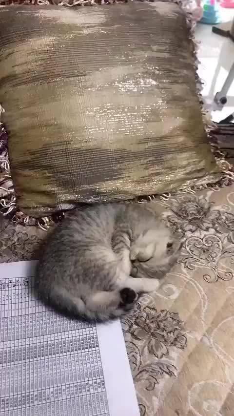 只有第一只猫猫睡成了圈⭕,其他都不合格