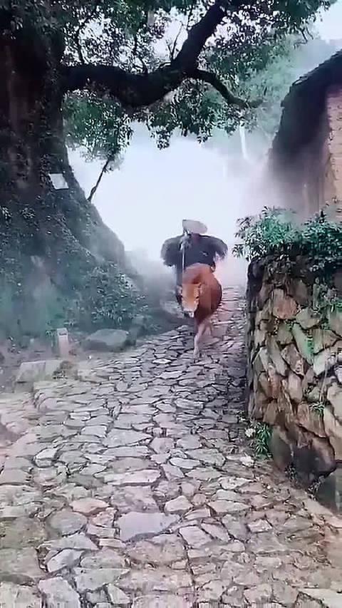 黄牛行雾里,老翁披斗笠。林中鸟声脆,神仙也迷离