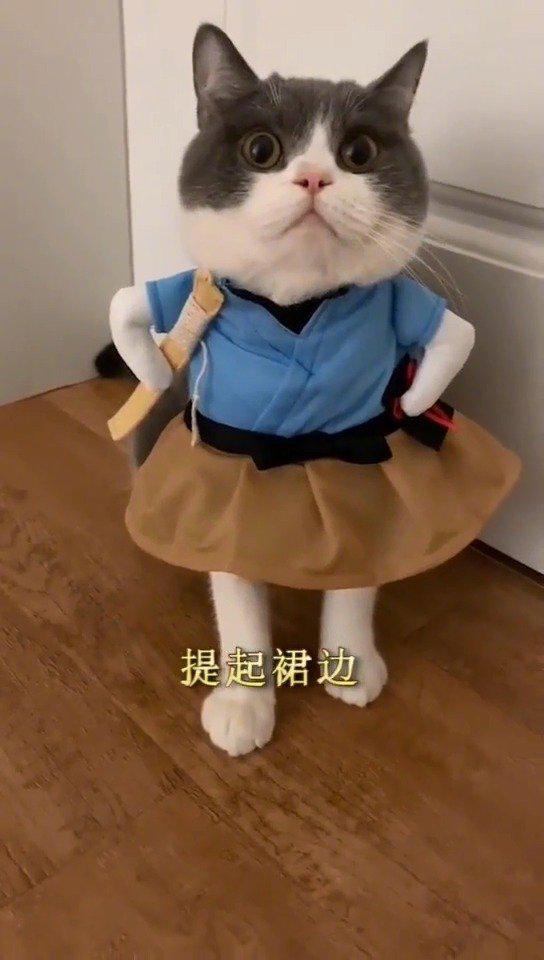 一首《猫的华尔兹》,送给在座的各位!!!