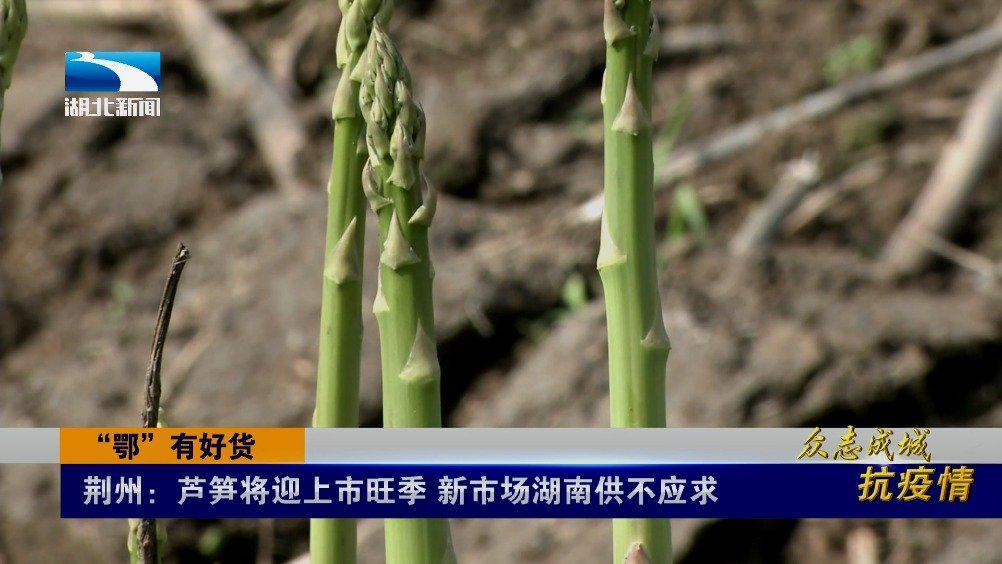 供不应求!芦笋将迎上市旺季畅销湖南市场