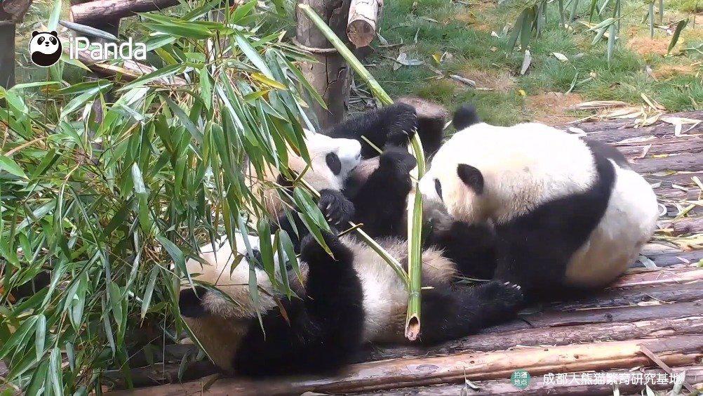 三熊行的友谊,感觉有点卑微