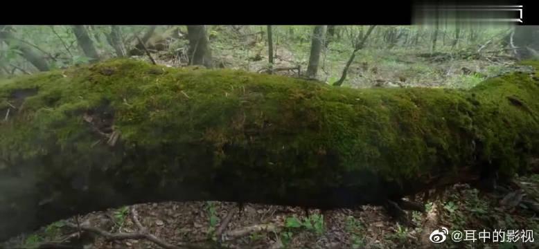 献唱韩剧《Forest》主题曲MV,感性演绎梦幻而又神秘的旋律!