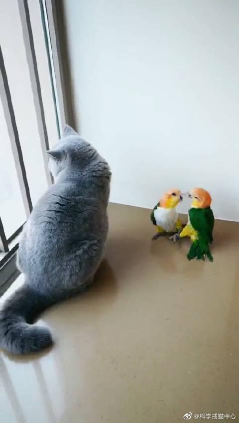 小鸟夫妇在打闹,惹到了小猫咪, 小猫咪:滚!