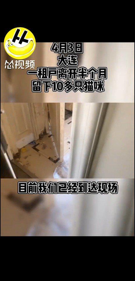 3日,网友爆料:租客离开半个月,留下10多只猫咪