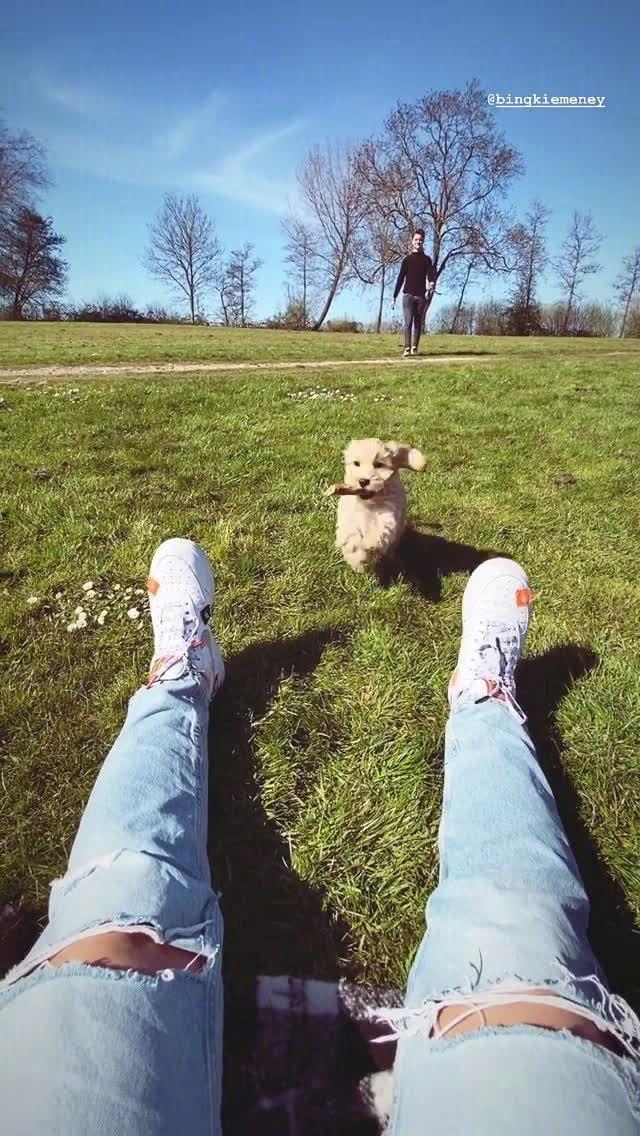 女友视角:坐在洒满阳光的草地上,德容和狗狗向你奔了过来