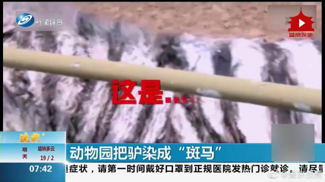 常州一动物园把驴染成斑马 园方:染料无害仅展出1小时