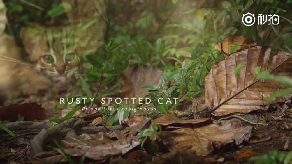 BBC全新纪录片《猫科动物》发布精彩片段
