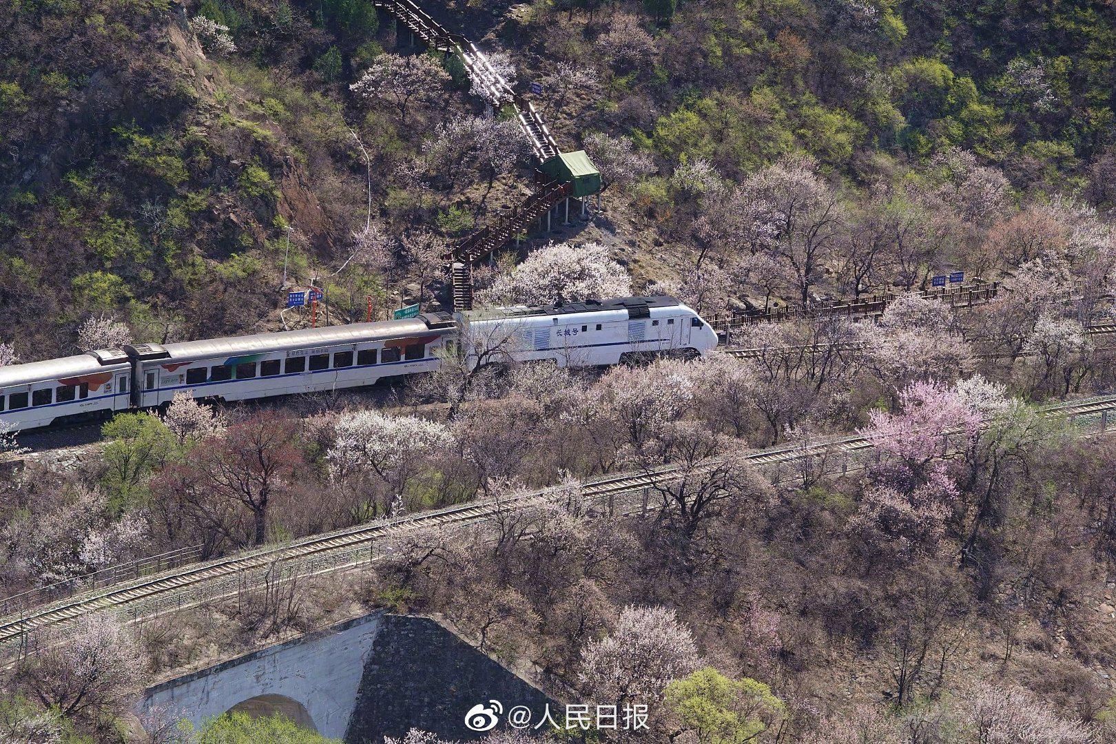 还记得那趟开往春天的列车吗?居庸关长城山花开好了!