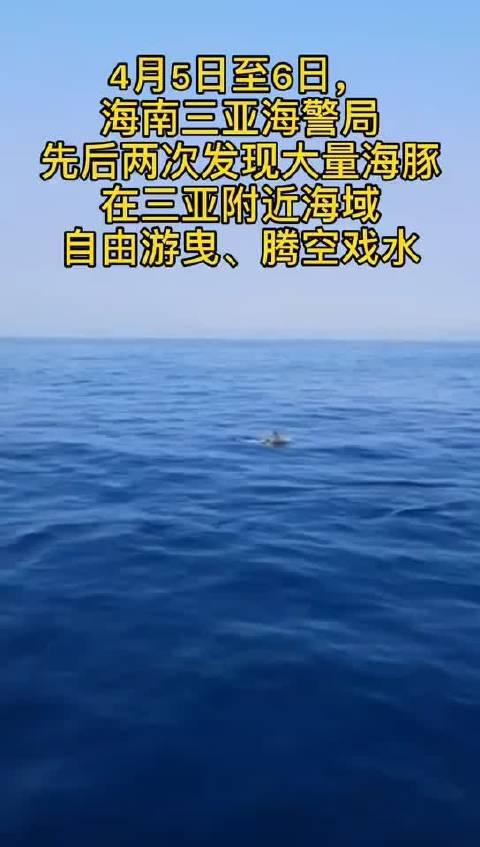 可爱!大量海豚惊现亚龙湾附近海域