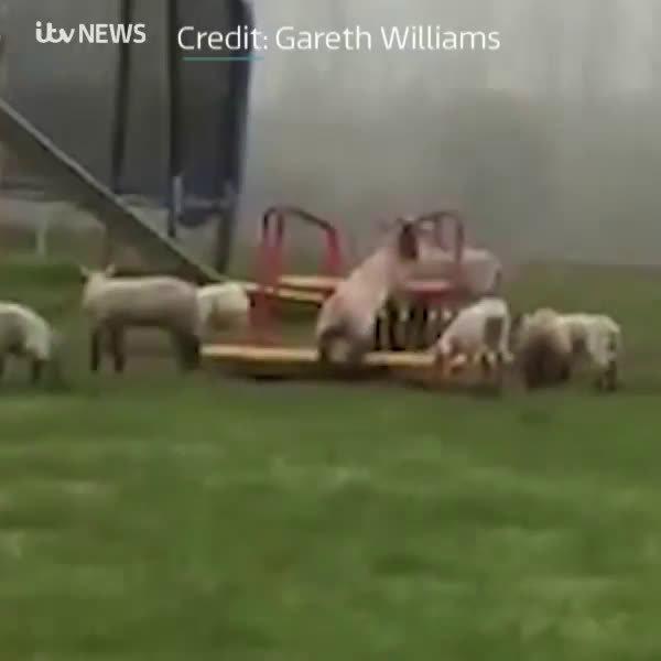 受疫情影响,威尔士Raglan农场公园对外关闭了……