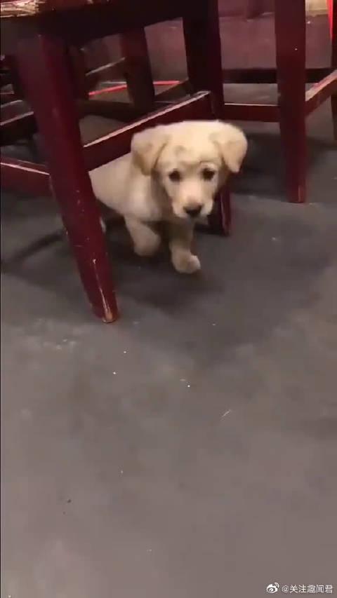 小流浪狗努力讨好人类又怯生生不敢太靠近的样子……