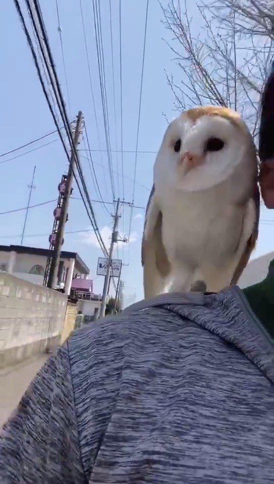 准备粗发去霍格沃茨上学~ (cr. daily__owls)