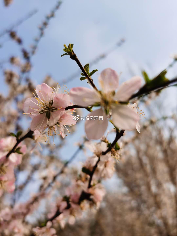 想看看大家相册里临汾的春天是什么样子的