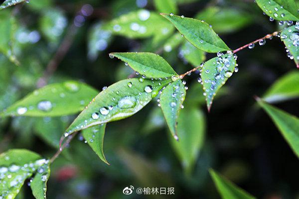 4月10日至11日,榆林迎来降温降水大风天气
