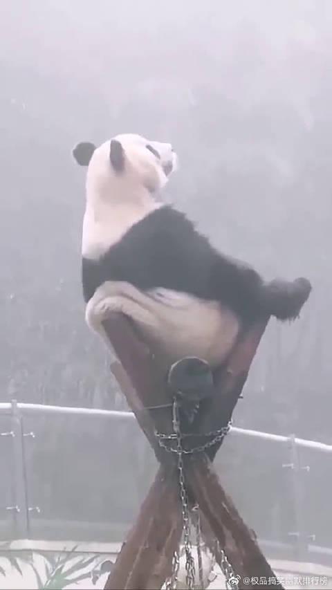 熊猫:天上飞的是什么?鸟儿还是云朵?