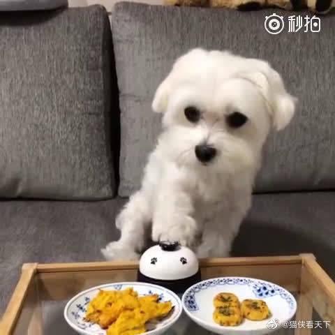 狗狗一按铃铲屎官就提供服务,一桌子零食不为所动就是要别人喂……