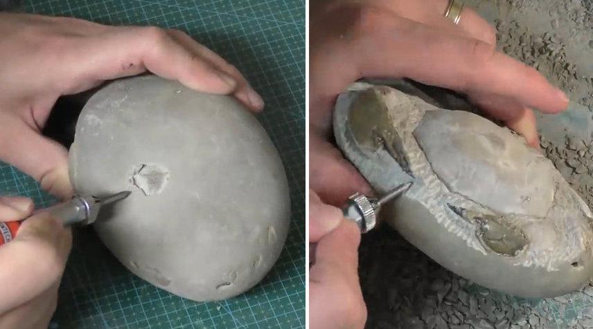 男子在新西兰海滩捡回一块石头 剥开惊现距今1200万年螃蟹化石