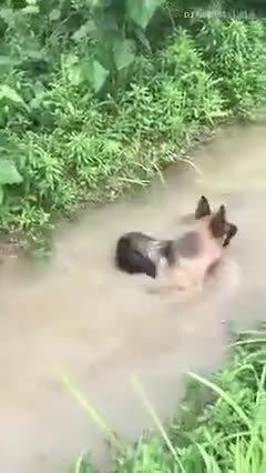 鸭子:内心一点不慌,看完轻松戏耍狗子
