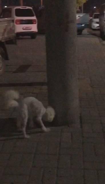 网友投稿:不知道是谁家的狗狗走丢了……