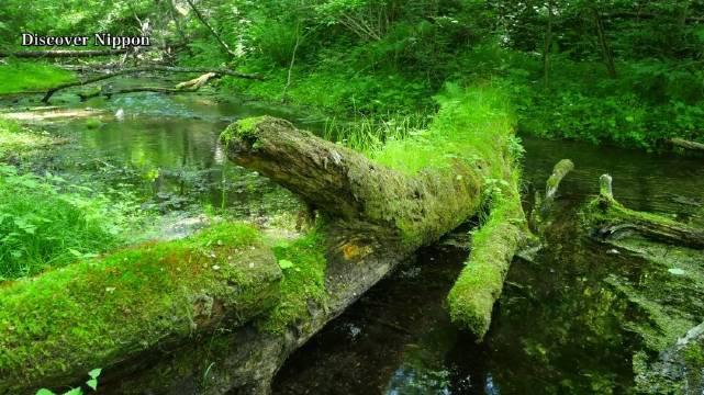新绿的 位于长野县的轻井泽一直是日本著名的避暑圣地……
